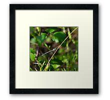 4 - Libellula Framed Print