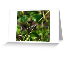 4 - Libellula Greeting Card