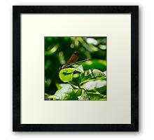 10 - Libellula Framed Print