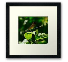 11 - Libellula Framed Print