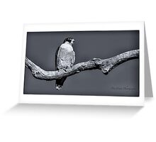 Peregrine Falcon in black & white Greeting Card