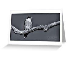 Peregrine Falcon in black & white Greeting Card