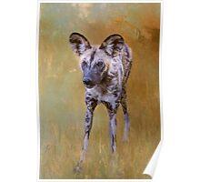African Wild Dog! Poster