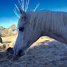 Snowy River Moonlight Sonata - A different kind of unicorn by Anthea  Slade