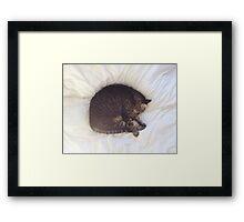 Furball Framed Print