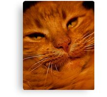 Not Impressed Canvas Print