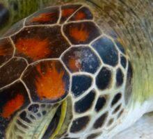 Turtle rescue - close-up Sticker