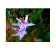 Uganda bush flowers - purple Art Print