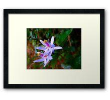 Uganda bush flowers - purple Framed Print