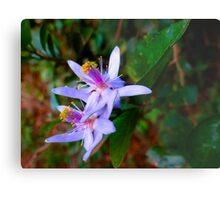 Uganda bush flowers - purple Metal Print