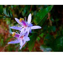 Uganda bush flowers - purple Photographic Print