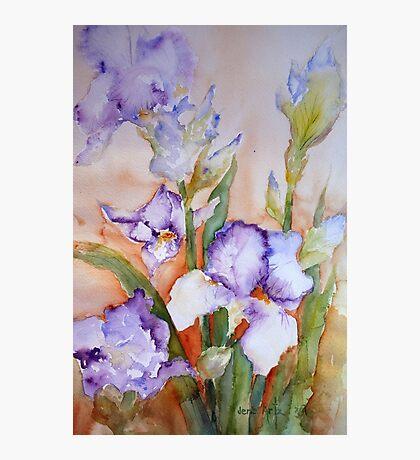 lavender Iris Photographic Print