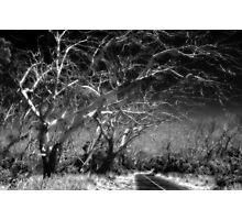 Dead trees  Photographic Print