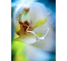 Floral lust  Photographic Print