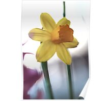 Macro vibrating background yellow flower photo Poster