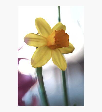 Macro vibrating background yellow flower photo Photographic Print