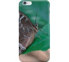 Blue Morpho underside butterfly color photo 1 iPhone Case/Skin