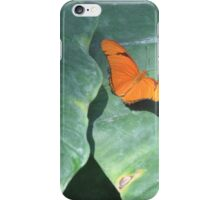 Orange Sulphur butterfly macro on petals color photo 2 iPhone Case/Skin