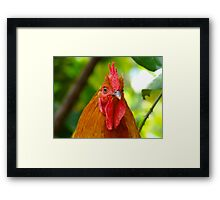 Cockerel rooster with small comb Framed Print