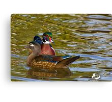 Male and Female Wood Duck Canvas Print