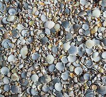 Sea Shell City 2 by Bethany Helzer