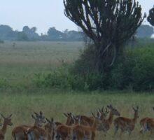 Kenya wildlife before QENP - morning run Sticker