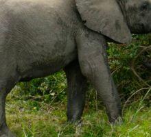 elephant heading to the bush Sticker
