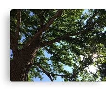 Of Branches and Starlight Canvas Print