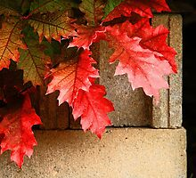 Leaves on Cement Blocks by Nazareth
