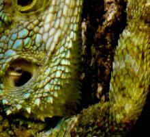lizard head close-up Sticker