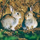 Baby rabbits  by areyarey