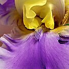 Magical Together - Bearded Iris by Cee Neuner