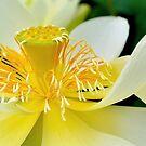 White Lotus by Cee Neuner
