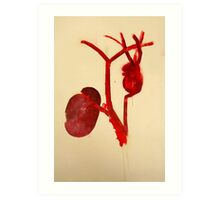 cardio vascular system i  Art Print