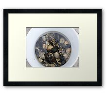 Cockles and Mussels alive alive o Framed Print