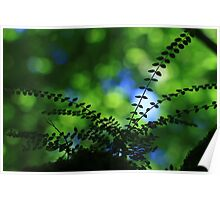 Privet With Sycamore & Sky - Vintage Lens Poster