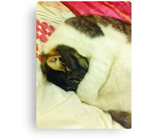 Grumpy Sleepy Cat Canvas Print