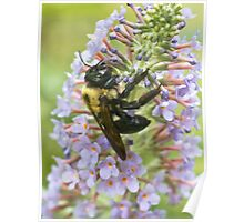 Dusted with Pollen Poster