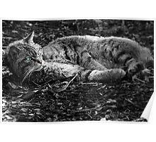 Black & White Wild Cat Poster