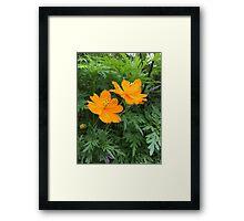 Beauty in Flowers  Framed Print