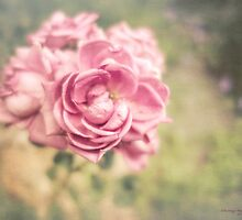 Vintage Rose by KatMagic Photography