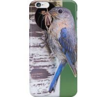 Bluebird with Grasshopper for Nestlings iPhone Case/Skin