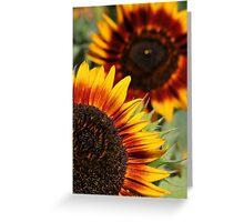Velvet Queen Sunflowers Greeting Card