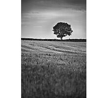 Lonely Tree Photographic Print