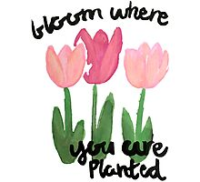 Blossom Where You Are Planted Photographic Print