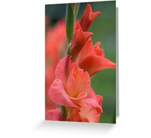 Summer in the Garden Greeting Card