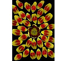 Tulip Sunburst Photographic Print