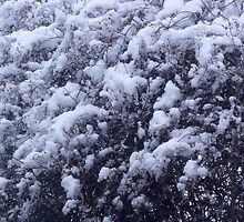 Snowy Bush by raidensden