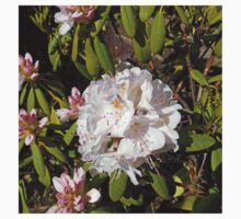 Deliacate Beauty - Rhododendron Blossom Kids Clothes