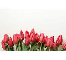 Red tulips in a row Photographic Print